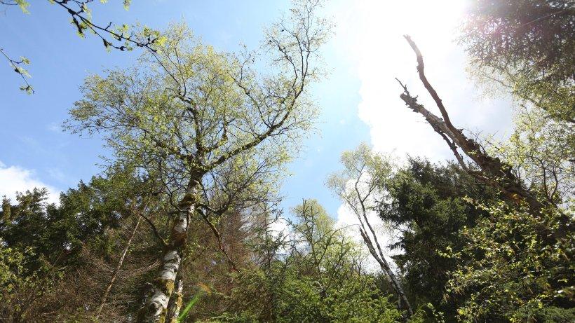 """Wetter Thüringen: Durch """"Fatale Wetterereignisse"""" – Zustand der Wälder dramatisch"""