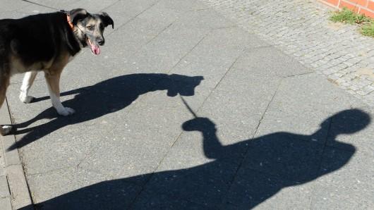 Jeder, der in Thüringen einen Hund hat, sollte aufpassen. Ein gefährlicher Fund befindet sich auf den Straßen (Symbolfoto).