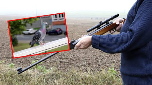 Ein Mann hat in Thüringen eine Taube mit einer Luftdruckwaffe erschossen. Der Grund macht sprachlos. (Symbolbild/Collage)