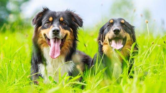 Seine Hunde haben die Beamten ungewollt auf die Spur gebracht. (Symbolbild)