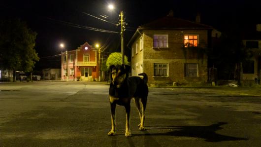 Hund: Ein Mann überfuhr nachts ein Tier (Symbolbild).