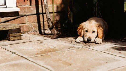 Hund: Ein Vierbeiner in Mecklenburg-Vorpommern wurde brutal mit einer Axt getötet. Wie konnte seine Halterin das zulassen? (Symbolbild)