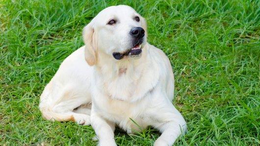 Hund Tao erblindet mit elf Jahren. Dann bekommt er ein besonderes Geschenk. (Symbolbild)