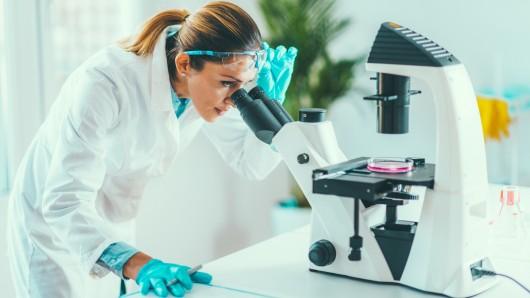 Wissenschaft: Unter dem Mikroskop konnten die Forscher das Rätsel um den Käfer lösen (Symbolbild).