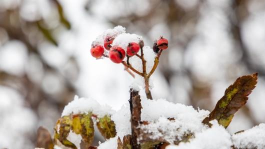 Winter-Prognose für Deutschland: Wie wird der Winter 2020? (Symbolbild)