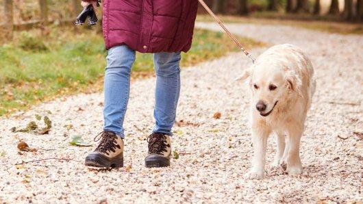 Hund in Bayern: Als eine Hundehalterin kurz auf die Toilette musste, ahnte sie noch nicht, dass sie kurz darauf die Feuerwehr würde rufen müssen! (Symbolbild)
