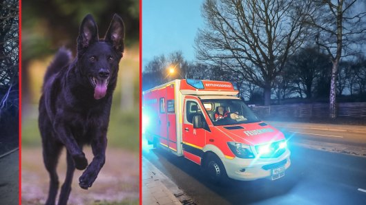 Hund: Als sein Besitzer ins Krankenhaus muss, tut dieser Hund etwas unglaubliches. (Symbolbild)
