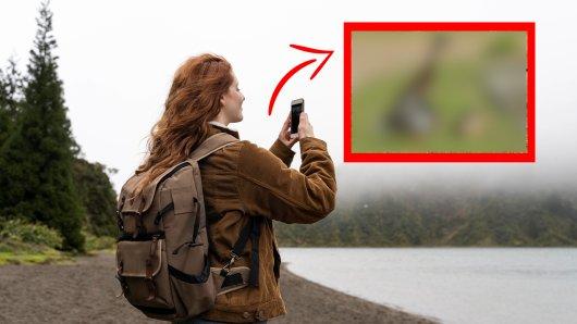 Urlaub in Großbritannien: Als Touristen dieses Tier sehen, müssen sie einfach ihr Handy zücken. (Symbolbild)