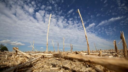Die Hitze und anhaltende Trockenheit haben den Forstbestand in Thüringen stark zu schaffen gemacht. Aber auch andere Umwelteinflüsse tragen eine Mitschuld. (Symbolbild)