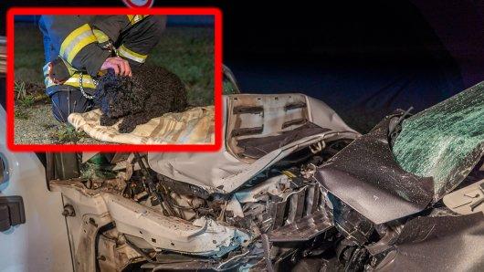 Drei Menschen wurden bei dem Unfall in Thüringen schwer verletzt. Ein Hund blieb zurück.