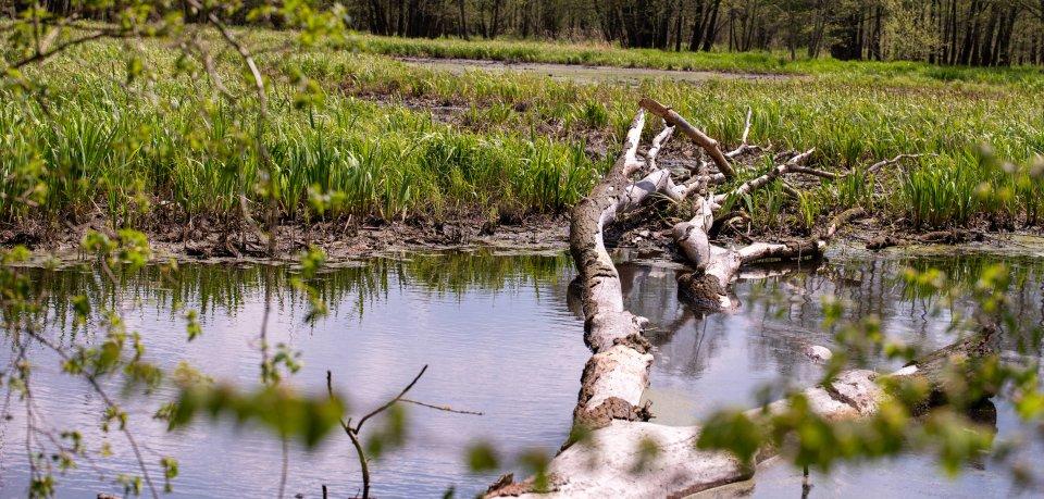 Ein Teich im Weimarer Land hat Wasser verloren. Dann kaum Erstaunliches ans Licht. (Symbolbild)