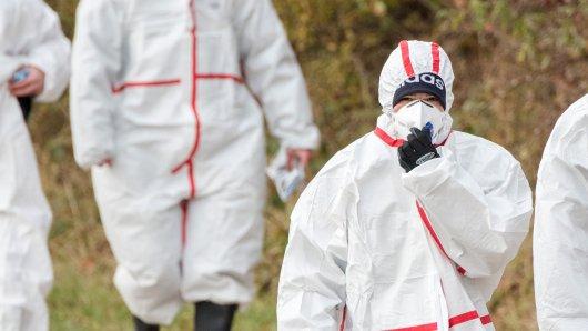 Mitarbeiter einer Entsorgungsfirma in Schutzanzügen auf dem Weg zum Geflügelbetrieb in Grumby.