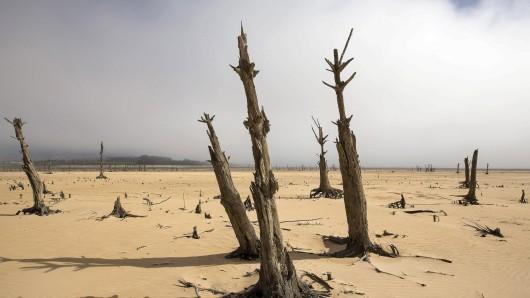 Südafrika, bei Kapstadt: Abgestorbene Bäume an dem in weiten Teilen trockenen Speichersee. Kann es auch in Thüringen zu solchen Szenarien kommen? (Symbolbild)