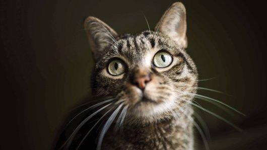 Freilaufende Katzen unterliegen in Thüringen der Katzenverordnung - doch nur wenige Kommunen setzen die Anforderungen um. (Symbolbild)