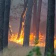 In Thüringen musste die Feuerwehr am Wochenende erneut zahlreiche Flurbrände löschen. (Symbolbild)