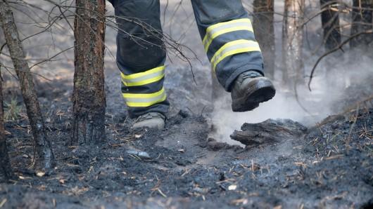 In Thüringen werden erste Waldbrände gemeldet. Bisher waren es zum Glück nur kleinere Feuer. (Archivbild)