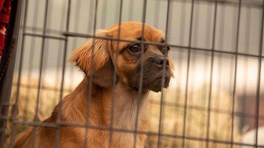 Hund: Dem misshandelten Tier blieb keine Wahl für ein neues Leben. (Symbolbild)