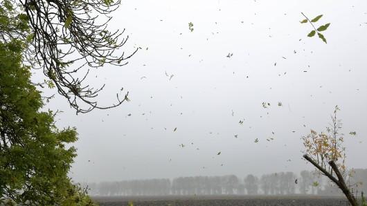 Sturmtief Siglinde hat viel kalte Luft nach Thüringen geblasen. Während sich der Wind nach und nach verzieht, soll der Regen bleiben. (Symbolbild)