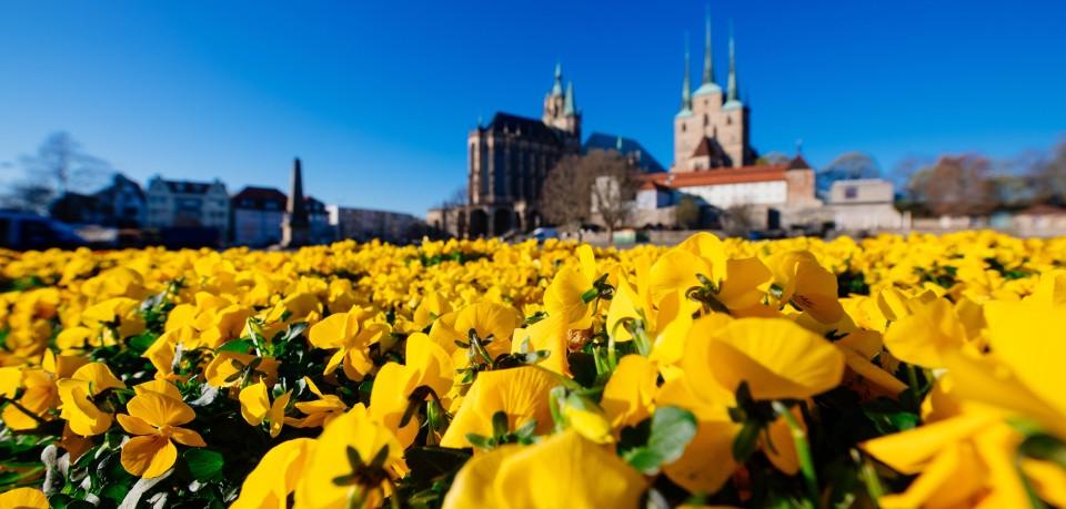 Guerilla-Aktion auf dem Domplatz in Erfurt! 3.000 Hornveilchen schmücken den Mittelpunkt der Blumenstadt. Auch sie dürften sich über die Wetter-Aussichten für Thüringen freuen...